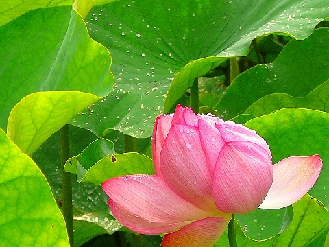 2007 7月鴨川旅行0701.jpg