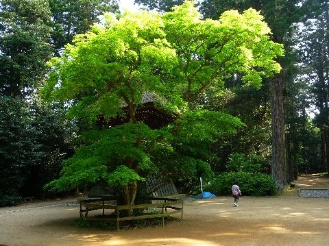 2010  5月5日銚子 283.jpg