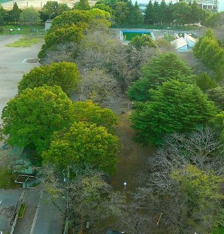 2012 10月14日紅葉 004.jpg