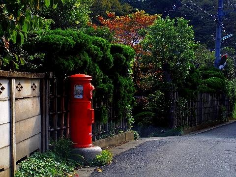 2012 10月8日日常コスモス 048.jpg