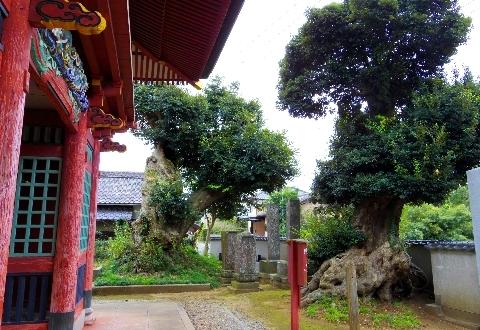 2012 11月11日東庄 036.jpg