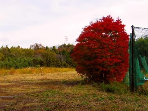 2012 11月24日紅葉 042.jpg