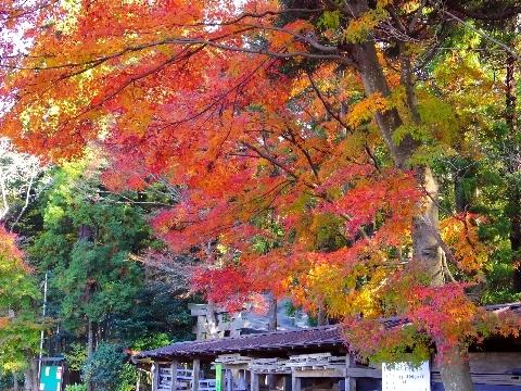 2012 11月24日紅葉 091.jpg