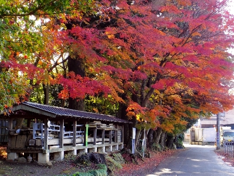 2012 11月24日紅葉 109.jpg
