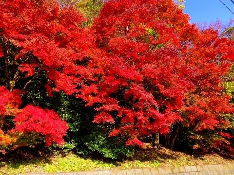 2012 11月24日紅葉 133.jpg