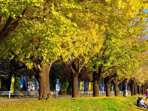 2012 11月24日紅葉 154.jpg