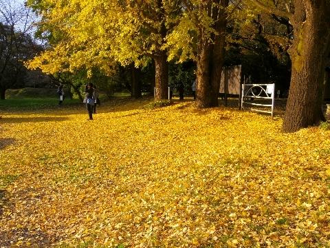 2012 11月24日紅葉 156.jpg