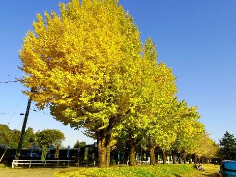 2012 11月24日紅葉 167.jpg