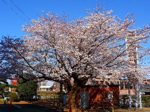 2012 4月8日桜 043.jpg