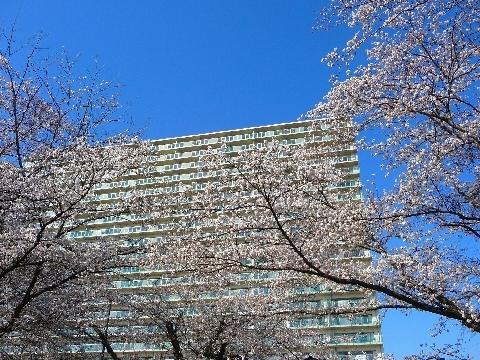 2012 4月8日桜 081.jpg