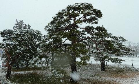 2013 1月14日雪 146.jpg