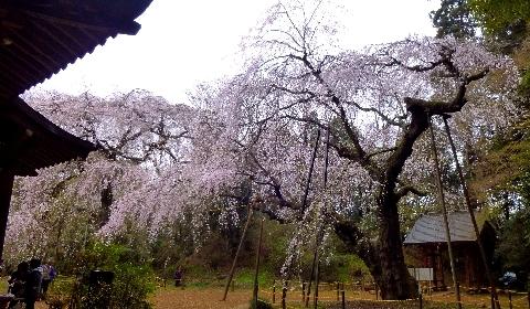 2013 3月24日福星寺 115.jpg