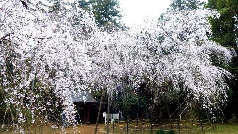2013 3月24日福星寺 123.jpg